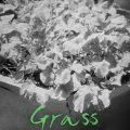 Grass (2018) (Korean) Free Download