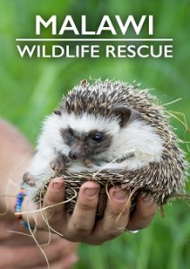 Malawi Wildlife Rescue Complete S01 Free Download Mp4