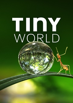 Tiny World Complete S01 Free Download Mp4